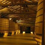 Young fermentation vats