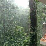 View from woodpecker balcony