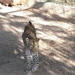 The princess of Dar es salaam Zoo