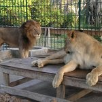 The king and queen of Dar es salaam Zoo