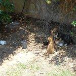 Feeding The Cats