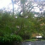 Un lugar con mucho verde, en el patio de la posada. Vista desde el salón de juegos un día de llu