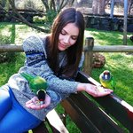 With the 28 parrots
