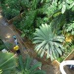 Palm House Balcony