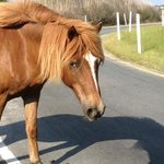 pony in the road