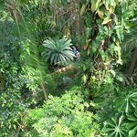 from Palm House balcony