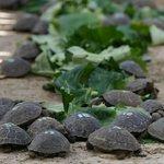 Tortoise Breeding Center - December 2013