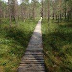 Sentiero botanico di Varnikai (Trakai) - palude