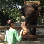 Elephant feeding about $5AUD