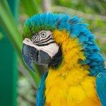 Gorgeous Macaw