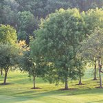 View of trees on the golf course