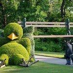 Le poussin nantais au jardin des Plantes