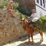 Horseman Ali