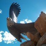 Large scuptured eagle in park