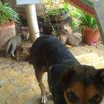 Finca del Sol's pets at breakfast