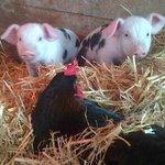 ...et les animaux à voir sur la ferme !