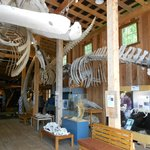The Whale Interpretive Centre