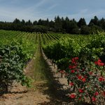 Vineyard nearby, Sonoma Valley