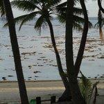 Dismal at low tide