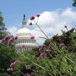 Photo of United States Botanic Garden taken with TripAdvisor City Guides