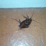 Cucarachas en la habitación