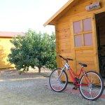 caseta de bicis