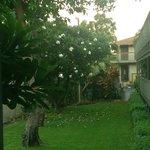 jardim - frente a varanda