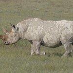 Safari Etosha Nationalpark