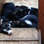 A whole pile of puppies!