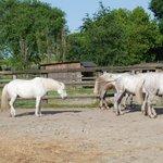 I cavalli Delta di Prato Pozzo