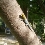 "Un ami dans les jardins de la ""papaye verte """