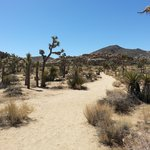 Joshua Tree hiking trail