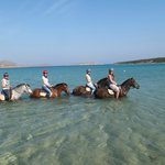 with the horses in the see