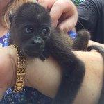 Baby Monkey from Congo Zipline Reserve