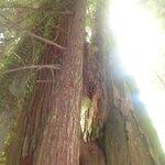 At the Immortal Tree