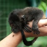 Our guide with a baby howler monkey
