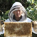 Learn how honey is made with our beekeeping shows