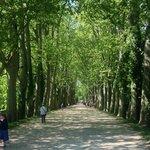 Treelined avenue up to chateau