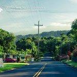 Uncle Harry's near mile marker 18 Hana Highway Wailua Maui Hawaii  Copyright © 2014 Sharon Mau