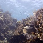 Pristine coral and sponges of the south side