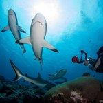 Yap Shark Diving