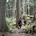 Old growth hiking