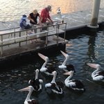 Fish cleaning facilities and pontoon