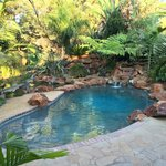 Pool infront of Guineafowl