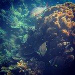 Hasting Reef