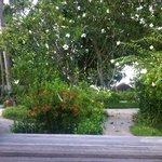Вид из Beach Villa