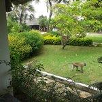 scimmie in giardino