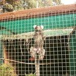 visitando los mono bb