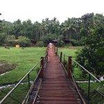 Spice plantation entry