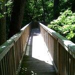 Walkway to the woods